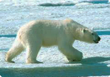 polarsmaller.png